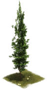 Файл:D SS EarlyMiddleAge Cypress.png